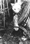 Photo- Ban Traps cat_lrg