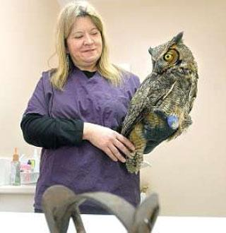 Photo- Ban Traps. Owl Caught in Trap