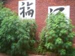 Hemp in China