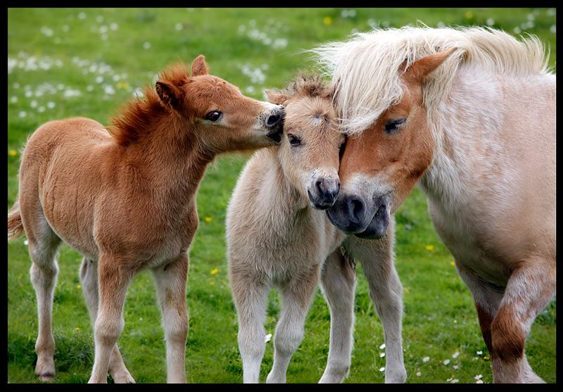 animals-pictures-horse-family - Do you ponder on the natural beauty of family? - Anonymous Diary Blog