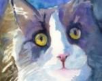 gray tuxedo cat like O'Neill