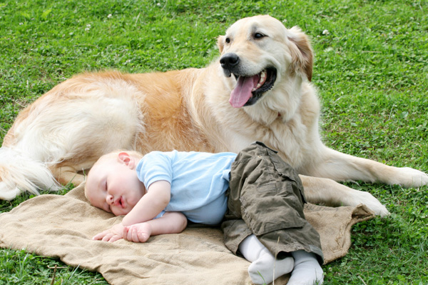 Image result for BABY ABD DOG
