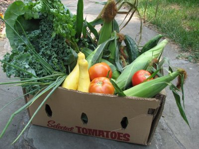 box-of-produce-from-a-CSA1