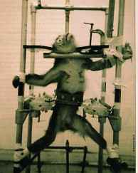 vivisection 1