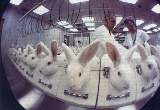 vivisection 2