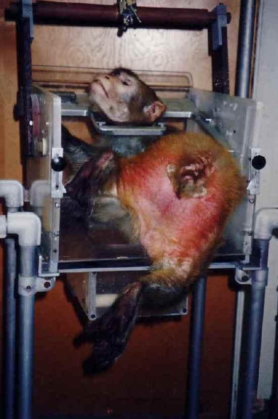 vivisection 5