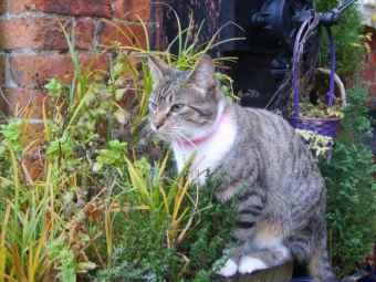 Maggie look alike in herb garden