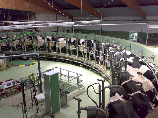 rotary-milking