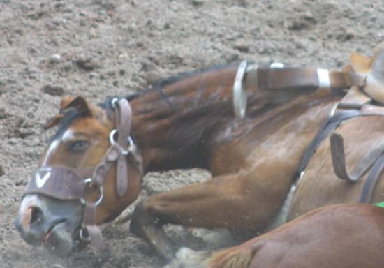stop the rodeo cruelty photo 4