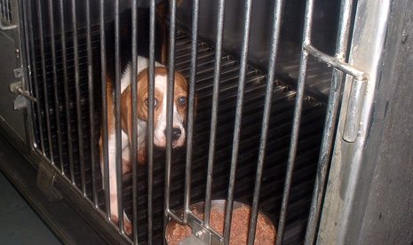 beagle terrified in cage must stop NOW