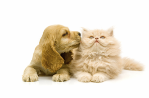 cute-puppies-and-kittens-kissing