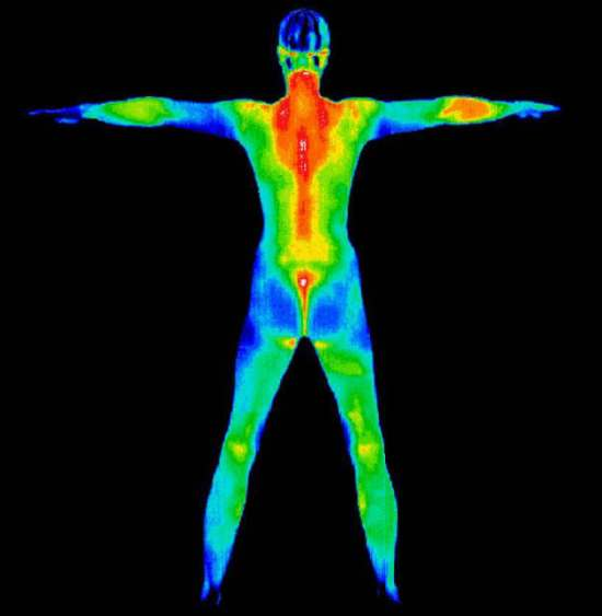 thermography entire body photo