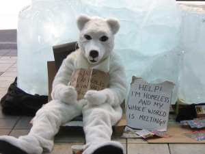 polar bear campaign photo