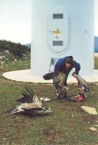 bird-kill2-sm