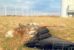 wind turbine bird kill