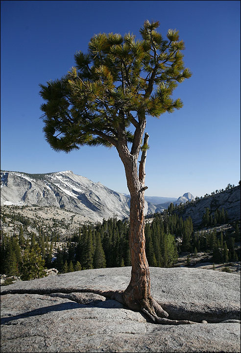 tree_in_rock