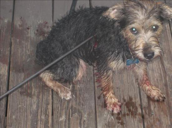 Dog Victim of Bow and Arrow Small